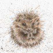 Wrendale Awakening Hedgehog Greeting Card
